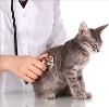 Ветеринарные клиники в Виле